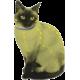 Natuurlijke Vlooien en Teken Halsband voor Katten